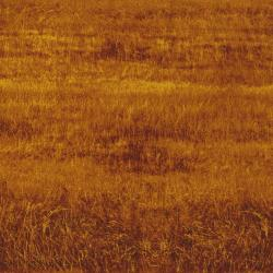 2411-003 Danscapes - Grass Field - Rust Fabric